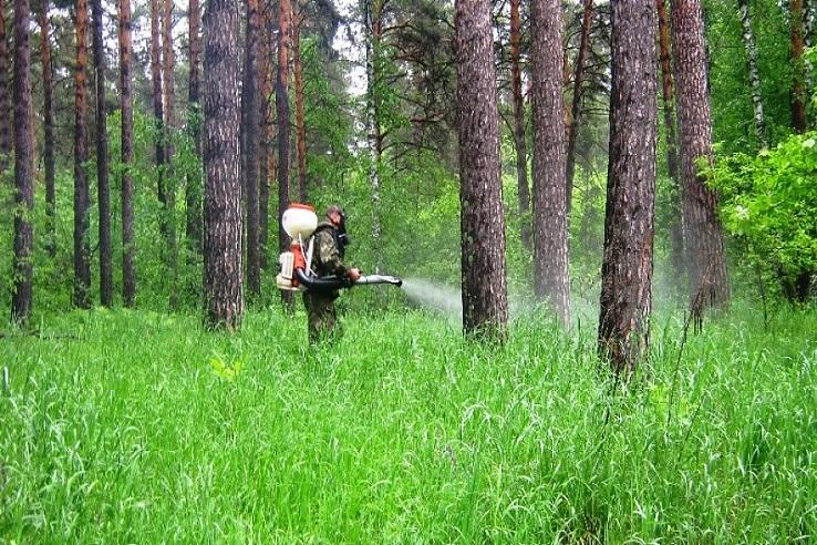 Обработка от клещей лесных массивов в Челябинске